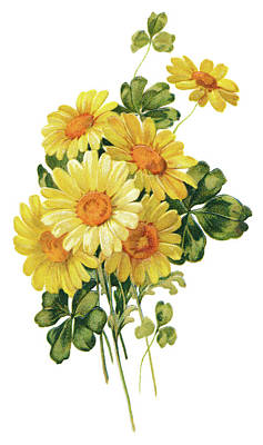 Daisy Drawing - Yellow Daisies by Neil Baylis