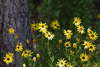 Photograph - Yellow Daisies With A Tree by Lynda Anne Williams