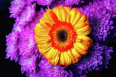 Gerbera Photograph - Yellow Daisy In Pompons by Garry Gay