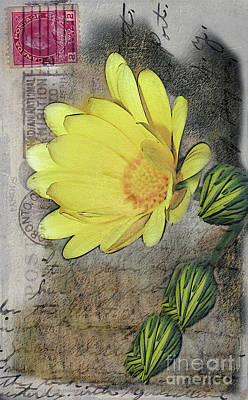 Photograph - Yellow Daisy On Vintage 1916 Postcard by Nina Silver