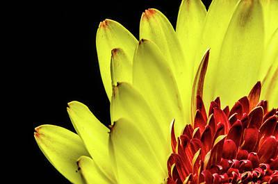 Yellow Daisy Peeking Art Print