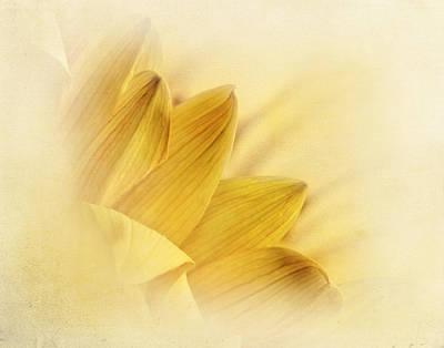 Photograph - Yellow Daisy Petals by David and Carol Kelly
