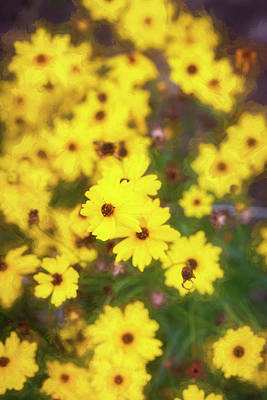 Photograph - Yellow Daisy Rudbeckia Hirta 001 by Rich Franco