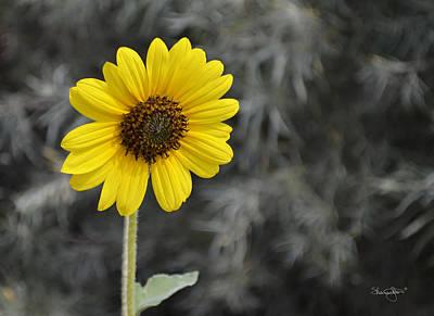 Photograph - Yellow Daisy by Shanna Hyatt