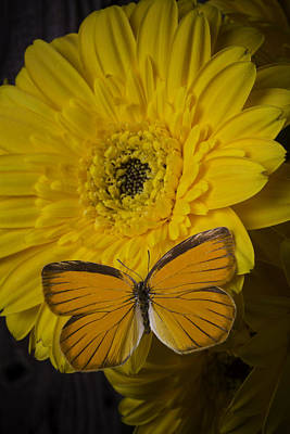 Gerbera Daisy Photograph - Yellow Daisy With Orange Butterfly by Garry Gay