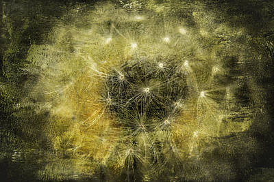 Photograph - Yellow Dandelion Fluff by Fred Denner