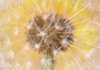 Digital Art - Yellow Dandelion Seeds by Mia DeBolt