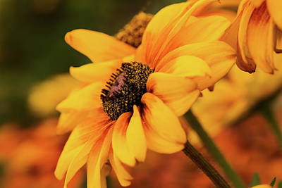 Print featuring the photograph Yellow Dark by Mary Jo Allen