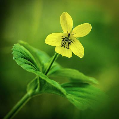 Photograph - Yellow by David Heilman