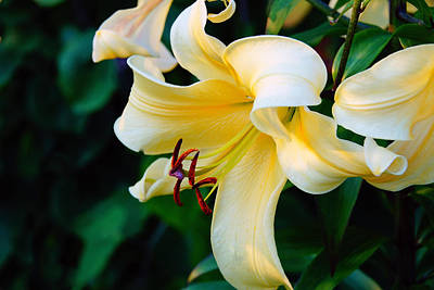 Photograph - Yellow Daylily  by Mike Murdock