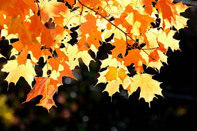 Fall Photograph - Yellow Delight by Emily Stauring