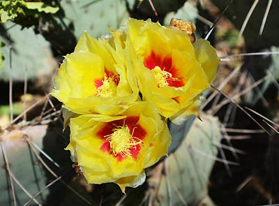 Photograph - Yellow Desert Blooms by Aimee L Maher Photography and Art Visit ALMGallerydotcom