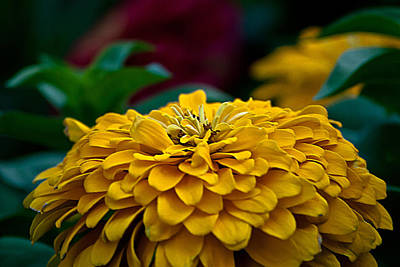 Flower Photograph - Yellow Dome by Emerald Studio Photography