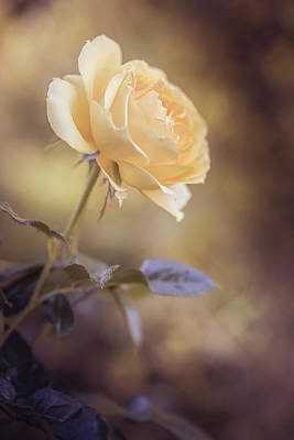 Photograph - Yellow Dream by Cindy Grundsten