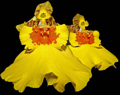 Art Print featuring the photograph Yellow Dresses by Judy Vincent
