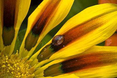 Photograph - Yellow Drop by Eric Miller