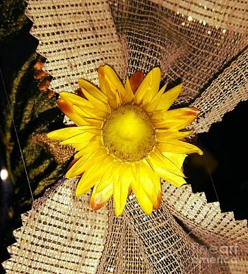Photograph - Yellow Dry Flower by Erika H