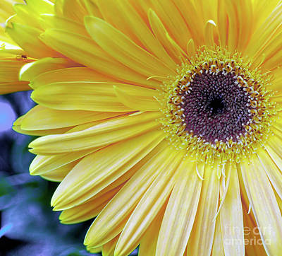 Photograph - Yellow by Elaine Manley