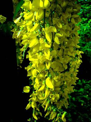 Photograph - Yellow Falls by Roberto Alamino