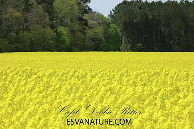 Photograph - Yellow Farm 1 by Captain Debbie Ritter