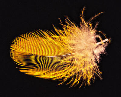 Yellow Feather Macro Art Print