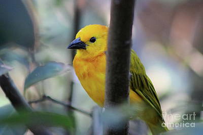 Photograph - Yellow Feathers by Erick Schmidt