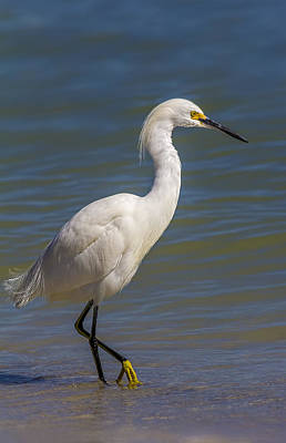 Sea Birds Photograph - Yellow Feet by Marvin Spates