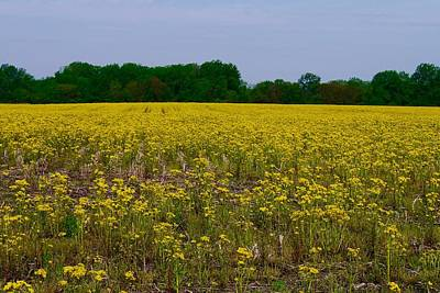 Photograph - Yellow Field by Tim Good