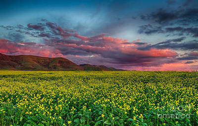 Photograph - Yellow Fields Forever by Beth Sargent