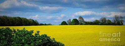 Photograph - Yellow Fields by Lainie Wrightson