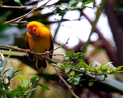 Photograph - Yellow Fince by Katy Hawk