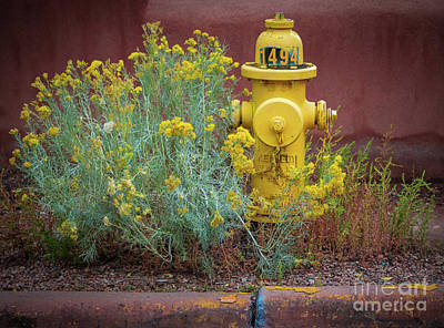 Fire Hydrants Photograph - Yellow Fire Hydrant by Inge Johnsson