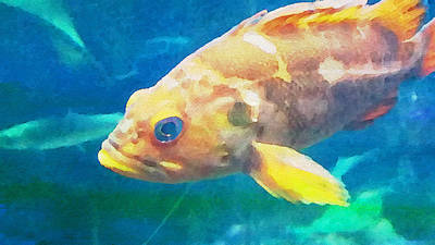 Photograph - Yellow Fish by Bonnie Bruno
