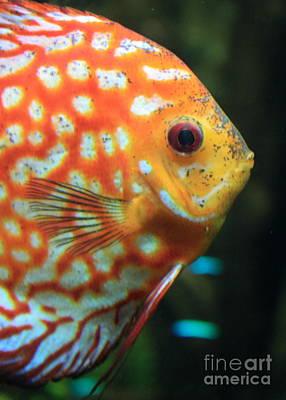 Greeting Card - Yellow Fish Profile by Carol Groenen