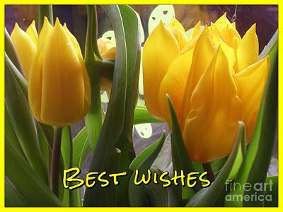 Photograph - Yellow Flame Tulips Greeting 3 by Joan-Violet Stretch