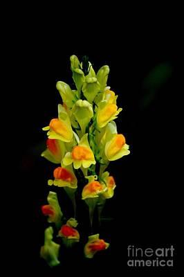 Photograph - Yellow Floral 7-24-09 by David Lane
