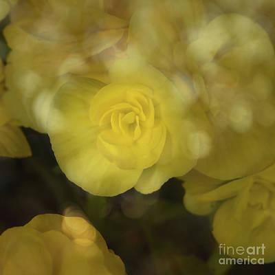 Photograph - Yellow Floral Art Print by Ella Kaye Dickey