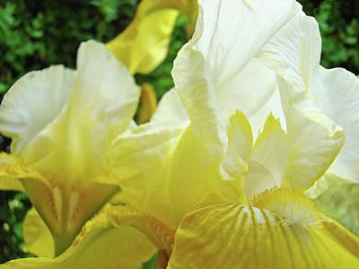Modern Man Surf - Yellow Floral Irises Flowers Garden Baslee Troutman by Baslee Troutman