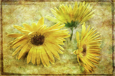 Photograph - Yellow Floral by Susan McMenamin