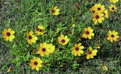 Photograph - Yellow Florida Wildflowers by D Hackett