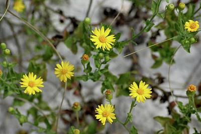 Panama City Beach Photograph - Yellow Florida Wildflowers by Tamra Lockard
