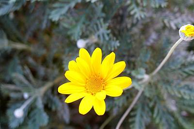 Photograph - Yellow Flower 02 by Dora Hathazi Mendes
