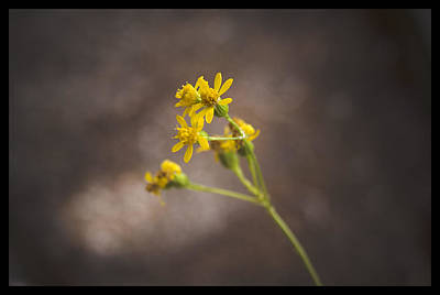 Photograph - Yellow Flower - 310260 by TNT Images