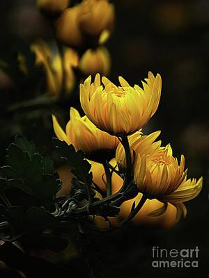 Yellow Flower A1 Original