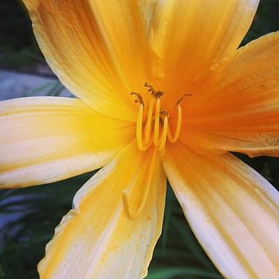 Yellow Flower, Art Print