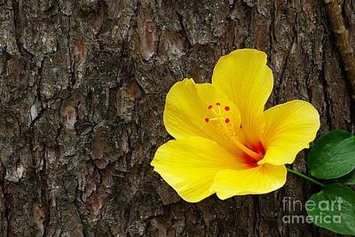 Tree Roots Photograph - Yellow Flower by Carlos Caetano