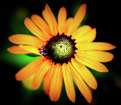Photograph - Yellow Flower by Charles HALL