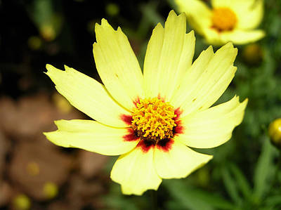 Yellow Flower Photograph - Yellow Flower by Dustin K Ryan