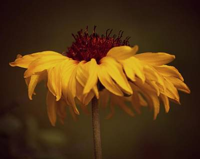 Photograph - Yellow Flower by Erica Kinsella