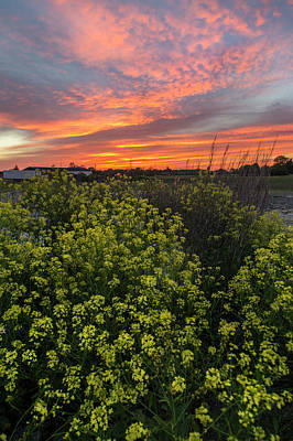 Photograph - Yellow Flower Field And Sunset by Sandra Rugina